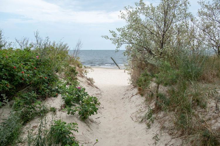 Baltic Sea Zempin Usedom Ostsee Beach Beauty In Nature Cloud - Sky Day Green Color Growth Horizon Horizon Over Water Koserow Land Nature No People Non-urban Scene Outdoors Plant Scenics - Nature Sea Sky Tranquil Scene Tranquility Tree Water