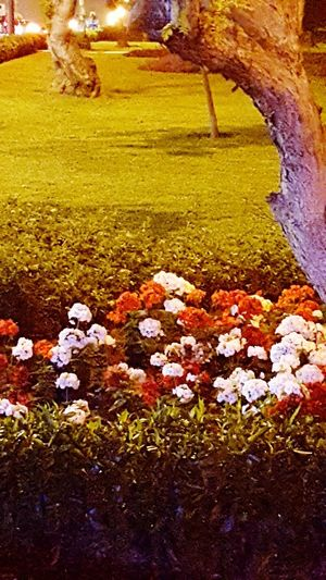 Beauty In Nature Nature Grass Lima-Perú Park Night Flowers Miraflores Lima The Love Park