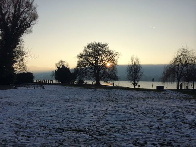 Zurich, Switzerland Sunne City Trees And Sky Foggyweather Naturephotography