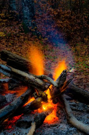 Naturelovers Autumn Colors Camping Relaxing