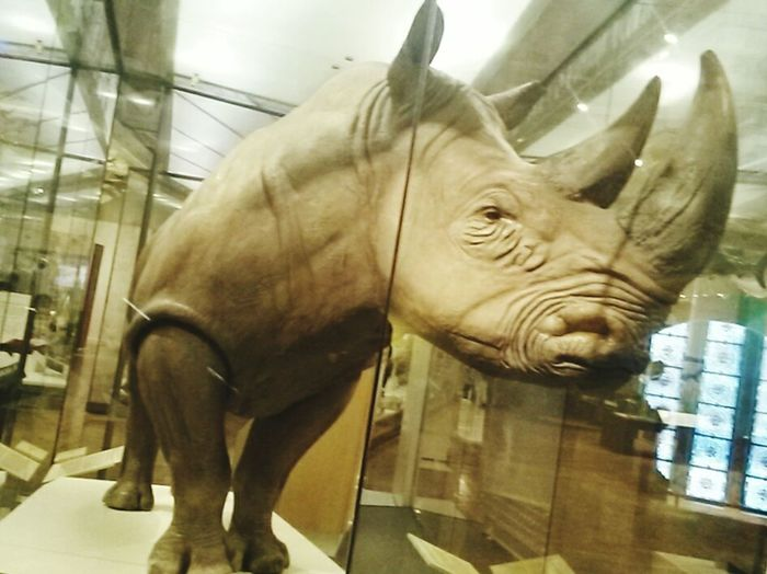 Science Museum  Huge Guy Those Horns!