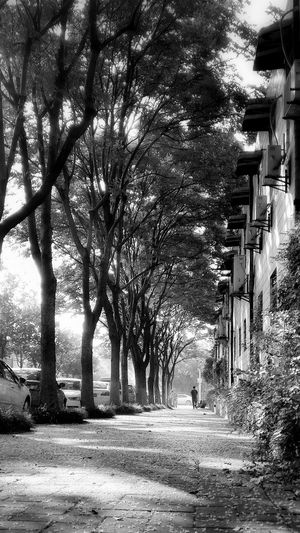 Road Sidewalk View Trees Morning First Eyeem Photo