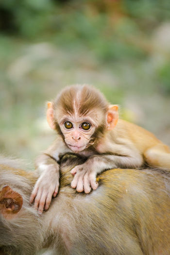 Kathmandu Kathmandu, Nepal Monkey Temple Nepal Textured  Animal Themes Animal Wildlife Infant Monkey Nature Outdoors Young Animal
