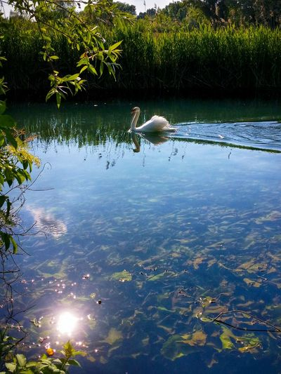 Quinto Di Treviso Treviso Veneto Italy Travel Photography Travel Voyage Traveling Mobile Photography Fine Art Backlight Nature Rivers Paddling Swans Reflections And Shadows Mobile Editing