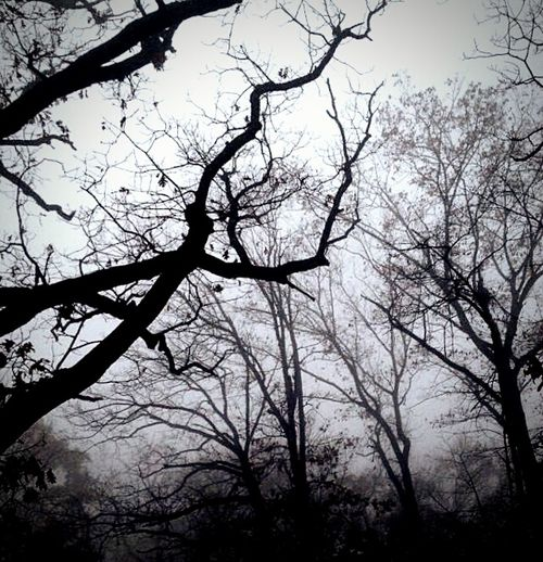 Forest Nature Dark Gothic Evening Atmosphere Walking