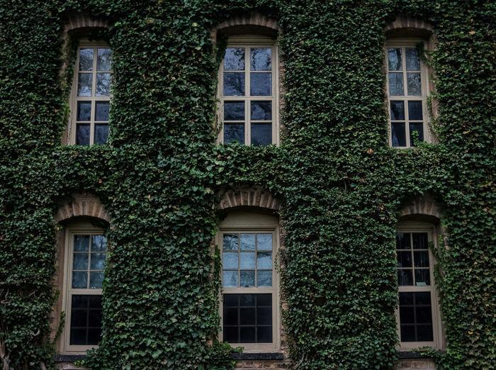 Ivy League. Check This Out Princeton The Week On Eyem EyeEm Best Shots Princeton University Showcase: January Ivy Ivy League
