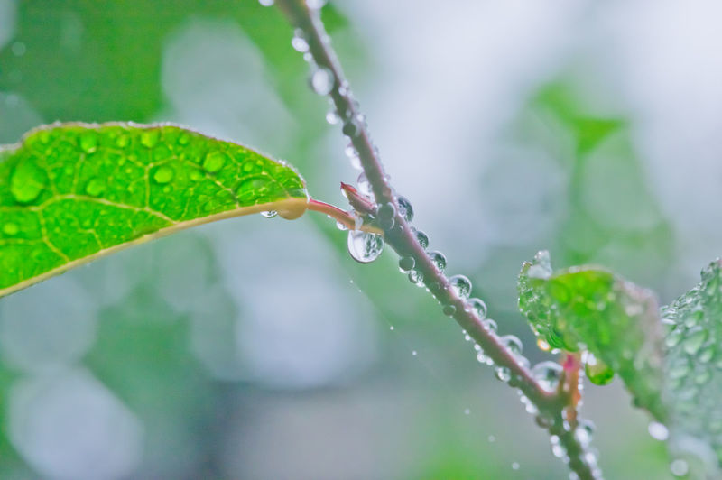 wet leaves with rain drops Close-up Drop Drops Drops Of Water Leaf Leaves Rain Drops On Leaves Rainy Day Wet Leaves