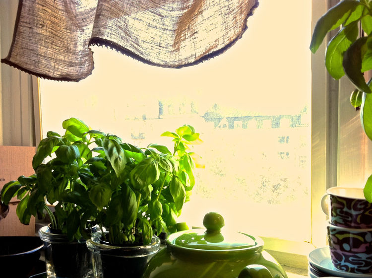 Background For Quotes Basil Cooking Time Food And Drink Fresh Herbs In Cooking Green Color Green Herbs Green Kitchen Harmony Harmony Of Colours Healthy Eating Herbs Indoors  Kitchen Window No People Presentation Background Sunny Day Vegetable Window Frame