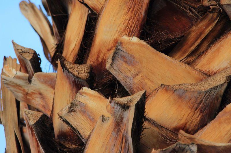 Close-up Palm