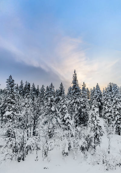 Snow covered trees under light blue sky with clouds Snow Cold Temperature Tree Winter Tranquil Scene Beauty In Nature Tranquility Sky Scenics - Nature Covering Nature Non-urban Scene No People Forest Frozen White Color Environment Coniferous Tree Pristine Nature Russian Winter Copy Space