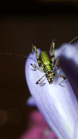 Insect Grasshopper Close-up Indoors  Nature Bugs World Insect Photography Beauty In Nature Macro