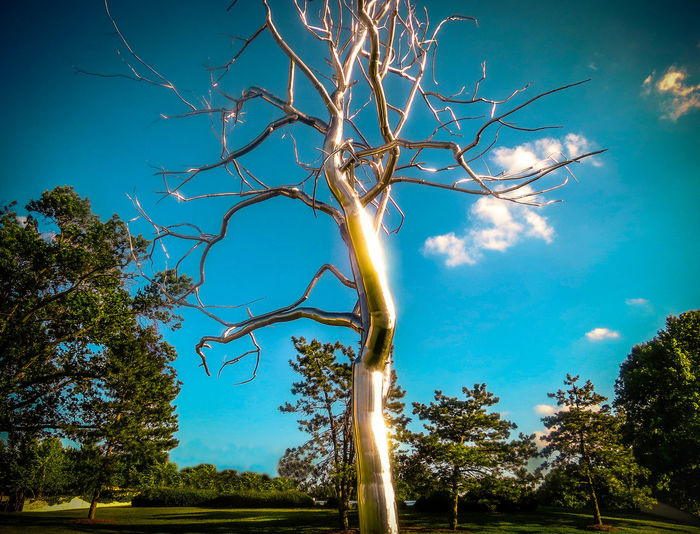 43 Golden Moments Beauty In Nature Landscape Tree