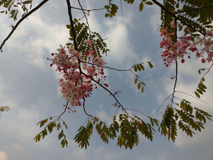 花 Tree Branch