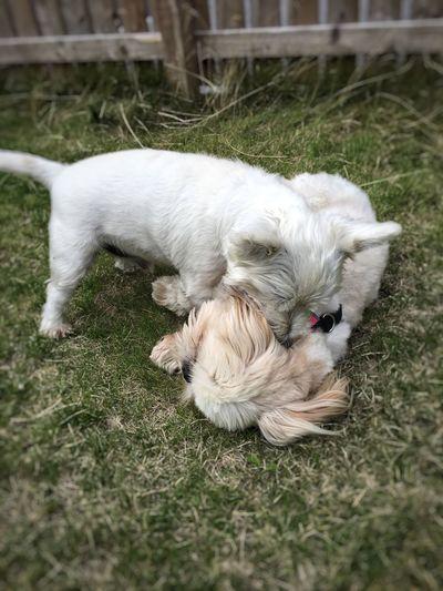 A little kiss