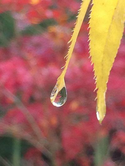 雨上がりの雫
