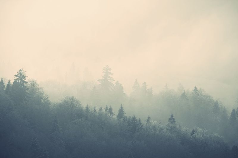 Tree Plant Fog Beauty In Nature Tranquility Nature Forest Tranquil Scene Scenics - Nature Growth Land Winter No People Cold Temperature Sky Idyllic Non-urban Scene Environment Outdoors Coniferous Tree