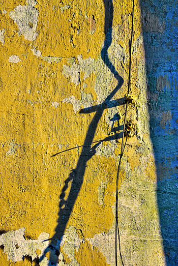 Yellow Shadow No People Plant Sunlight Day Nature Wall - Building Feature Tree Full Frame Outdoors Growth Textured  Backgrounds Architecture Built Structure Close-up Pattern Rough Wall Focus On Shadow