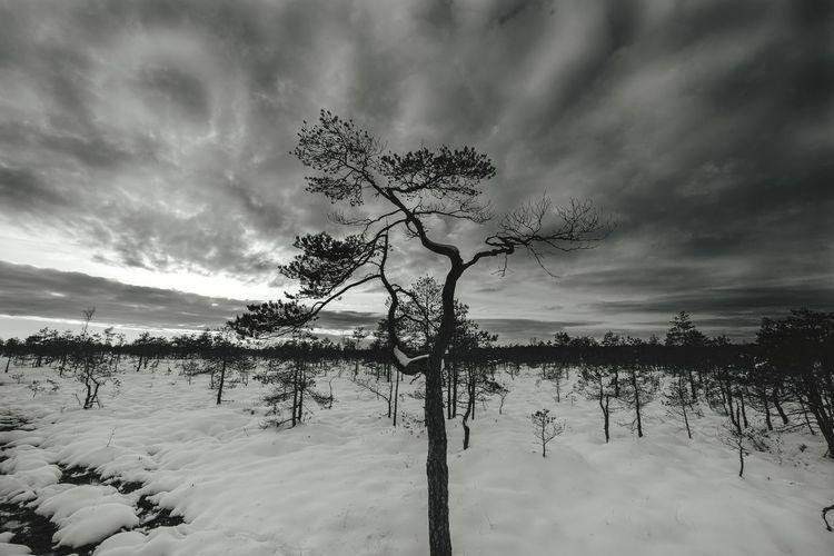 Trees against sky