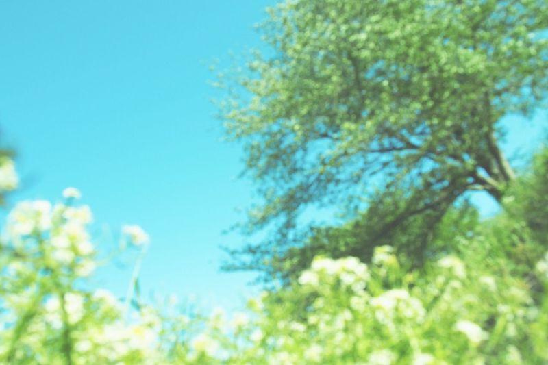 Photo Sky Eye Em Nature Lover もう夏ですね( ・⊝・ )