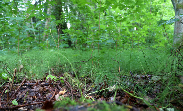 forest from frog perspective with details Biophilia Close-up Farne Ferns Forest Grass Grassy Green Green Color Growth Landscape Latvia Lettland  Nadeln Nahaufnahme Nahaufnahmen Selective Focus Tranquil Scene Waldboden