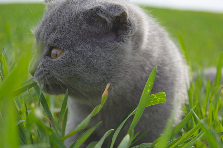 Kitty Grey Smoke Color Cute Cats In Grass Beauty Beauty In Nature Nature Portrait Spring Portrait Looking Animal Themes Animals In The Wild From My Point Of View By Ivan Maximov Moment EyeEm Selects Portrait Black Color Close-up Grass HEAD Animal Eye Cat Whisker Domestic Cat Kitten Feline Animal Hair Animal Head  Eye