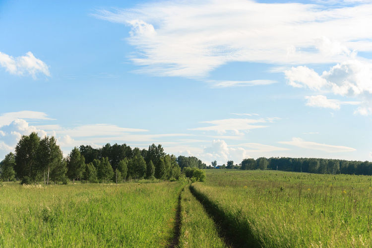 Track And Field Beauty In Nature Cloud - Sky Day Environment Field Grass Green Color Growth Land Landscape No People Outdoors Rural Scene Scenics - Nature Siberia Sky Track Trail Tranquil Scene Tranquility