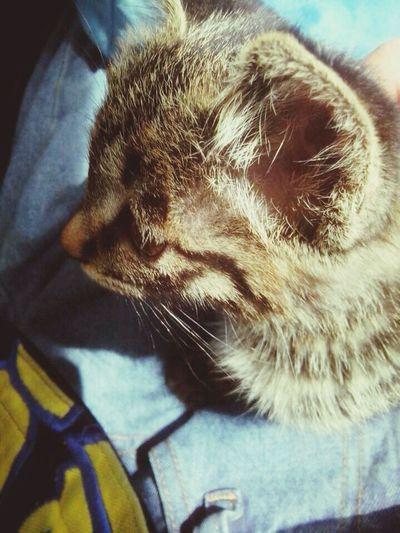 My cat qiang