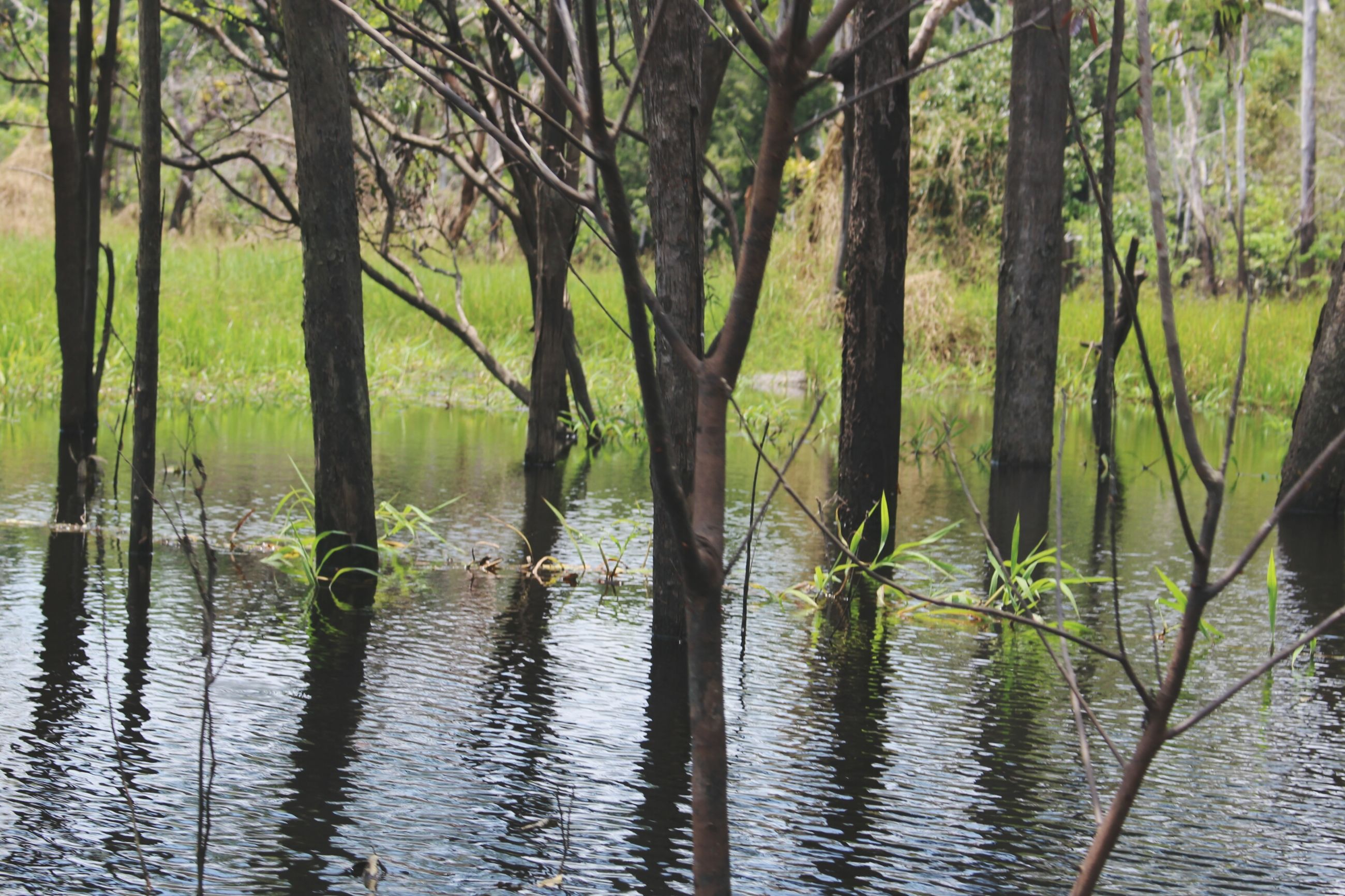 water, tree, growth, tranquility, lake, nature, tranquil scene, reflection, beauty in nature, green color, scenics, waterfront, plant, branch, tree trunk, day, forest, outdoors, river, rippled