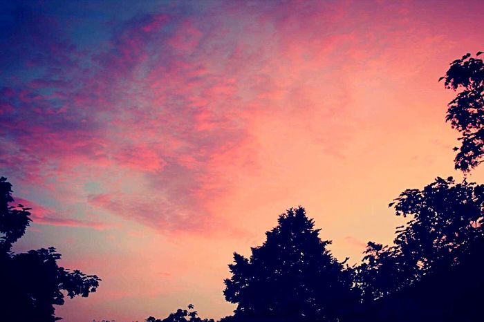 ⛅️ Sky Sunset Silhouette Nature Low Angle View Tree Beauty In Nature Cloud - Sky Dramatic Sky Scenics No People Outdoors EyeEmNewHere Photography Sun Colors Color Colorful Pink Color Pink Orange Orange Color Orange Sky Pink Sky EyeEmNewHere The Great Outdoors - 2017 EyeEm Awards