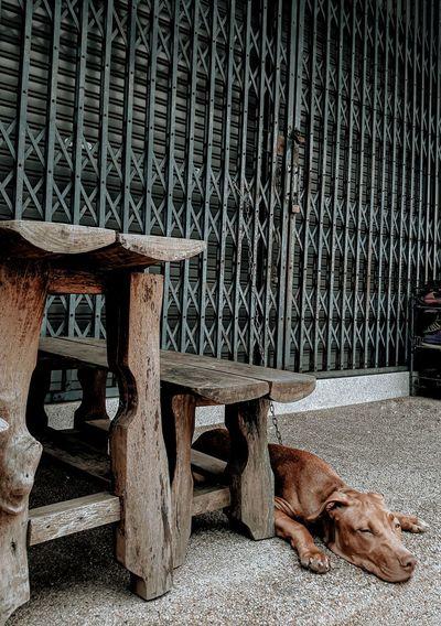 Dog resting on seat