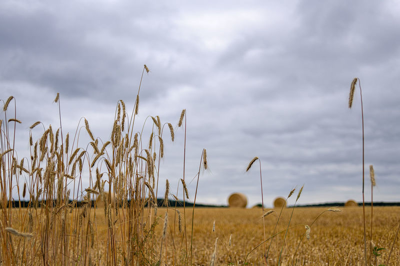 Field Land Growth Sky Landscape Cloud - Sky Crop  Agriculture Plant Rural Scene Beauty In Nature Cereal Plant Environment Nature Tranquility Day Farm No People Tranquil Scene Scenics - Nature Stalk