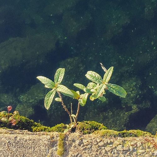 Nature Leaf Plant Beauty In Nature Water Green Color No People Day