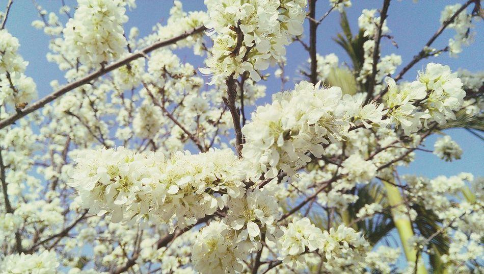 櫻花盛開的季節到了!