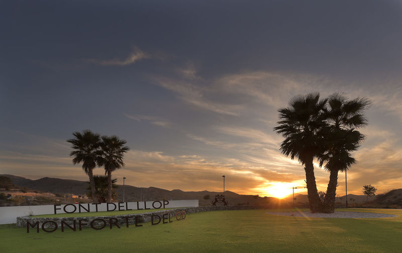 Sunset at the golf course called Font del Llop, municipality of Monforte del Cid, Alicante, Spain. Sky Tree Palm Tree Sunset Plant Tropical Climate Nature Land Beauty In Nature Scenics - Nature Cloud - Sky Tranquility Tranquil Scene Orange Color Outdoors Silhouette No People Monforte Del Cid Alicante Spaın Dawn Goal Field Spanish Valencian Community Grass Landscape Beautiful Nature Beautiful Beautiful Day Cloudscape Clouds And Sky Clouds Vertical Copy Space In Sky
