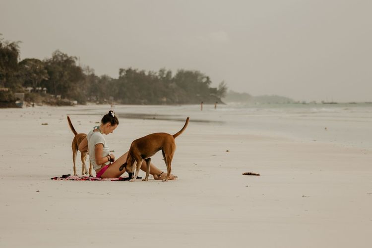 Diani Beach Dogs Of EyeEm Dogs Ocean Beachphotography EyeEm Selects Beach Animal Themes Animal Sand Domestic Animals Nature Animals In The Wild Pets Beauty In Nature No People Tree Outdoors Sky Mammal Day Sea