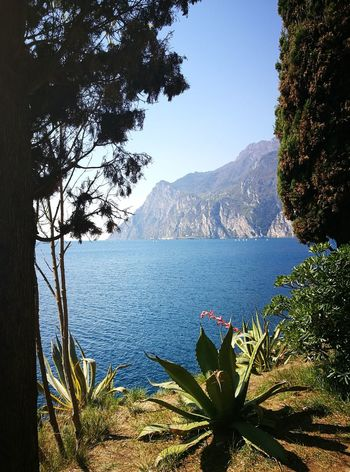 Mountain Nature Tree Beauty In Nature Flower Water Outdoors No People Sky No Edit/no Filter Sunlight Gardalake Italy❤️ Lake Riva Del Garda Fragility Freshness Green Color Landscape 3XSPUnity Trentino  Silence Wind