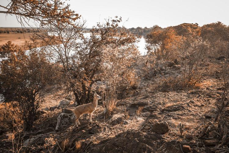 Deer standing on field during autumn