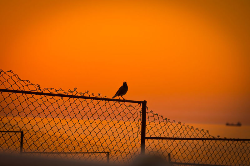 Birds perching on fence against orange sky
