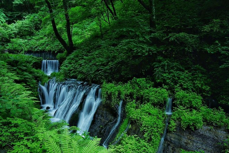 Naturelovers Green From My Point Of View Getting Inspired Beautiful Nature Nature_collection Water Waterfall Nature EyeEm Best Shots - Nature In The Forest 🌳🌲🌾 Forest Summer Views Summer Karuizawa