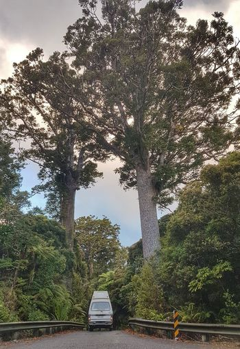 You know it is not always easy with a van on the road. But being in nature all the time, breathing the fresh air and coming back to a basic lifestyle is a really nice feeling. Kauri Tree The Traveler - 2018 EyeEm Awards Tree City Sky Vehicle Tree Trunk Woods