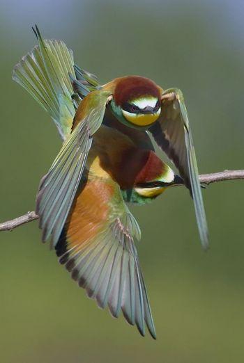 Fly natural
