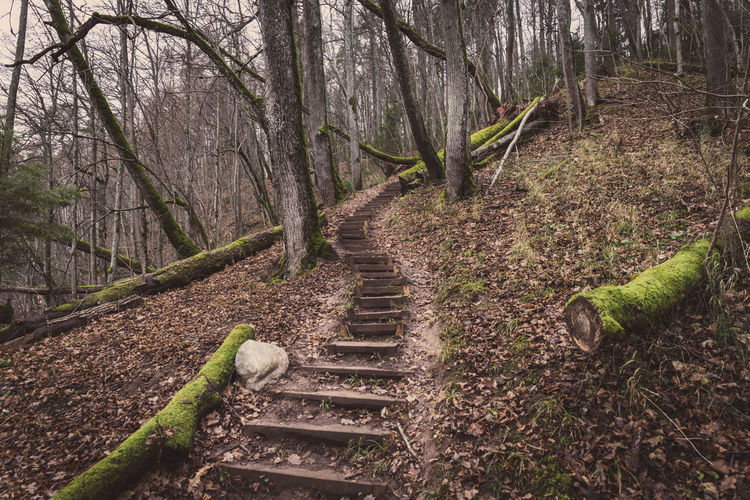 Uphill steps in woods Tree Trunk Tree Tranquility Tranquil Scene Outdoors No People Nature Landscape Forest Domestic Animals Day Branch Animal Themes #lifestyle #hike #autumn #active #Adventure