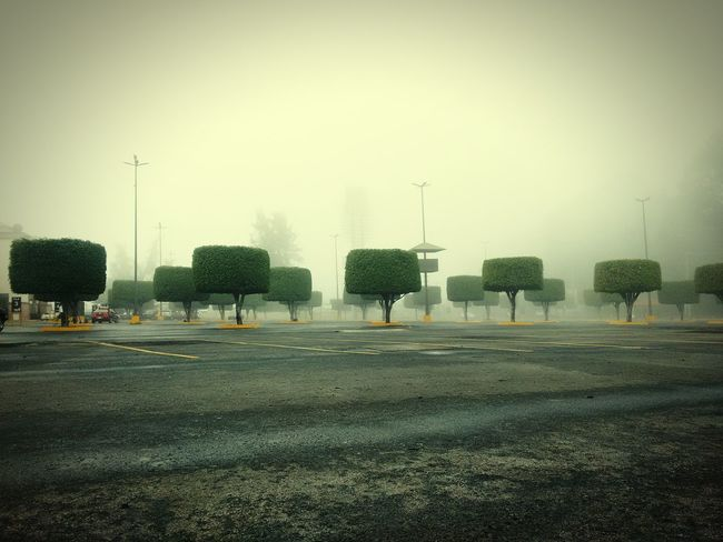 Point Of View Textures And Surfaces From My Point Of View Parking Lot Lonlyness Lonliest Place Foggy Day Foggyday Perspectives Urban Nature