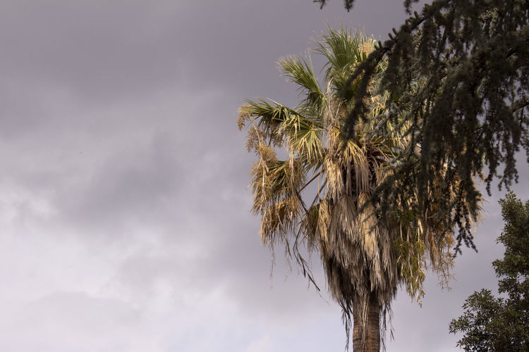Palm Tree Cloud - Sky No People Coconut Palm Tree Stormy Nature Growth Outdoors