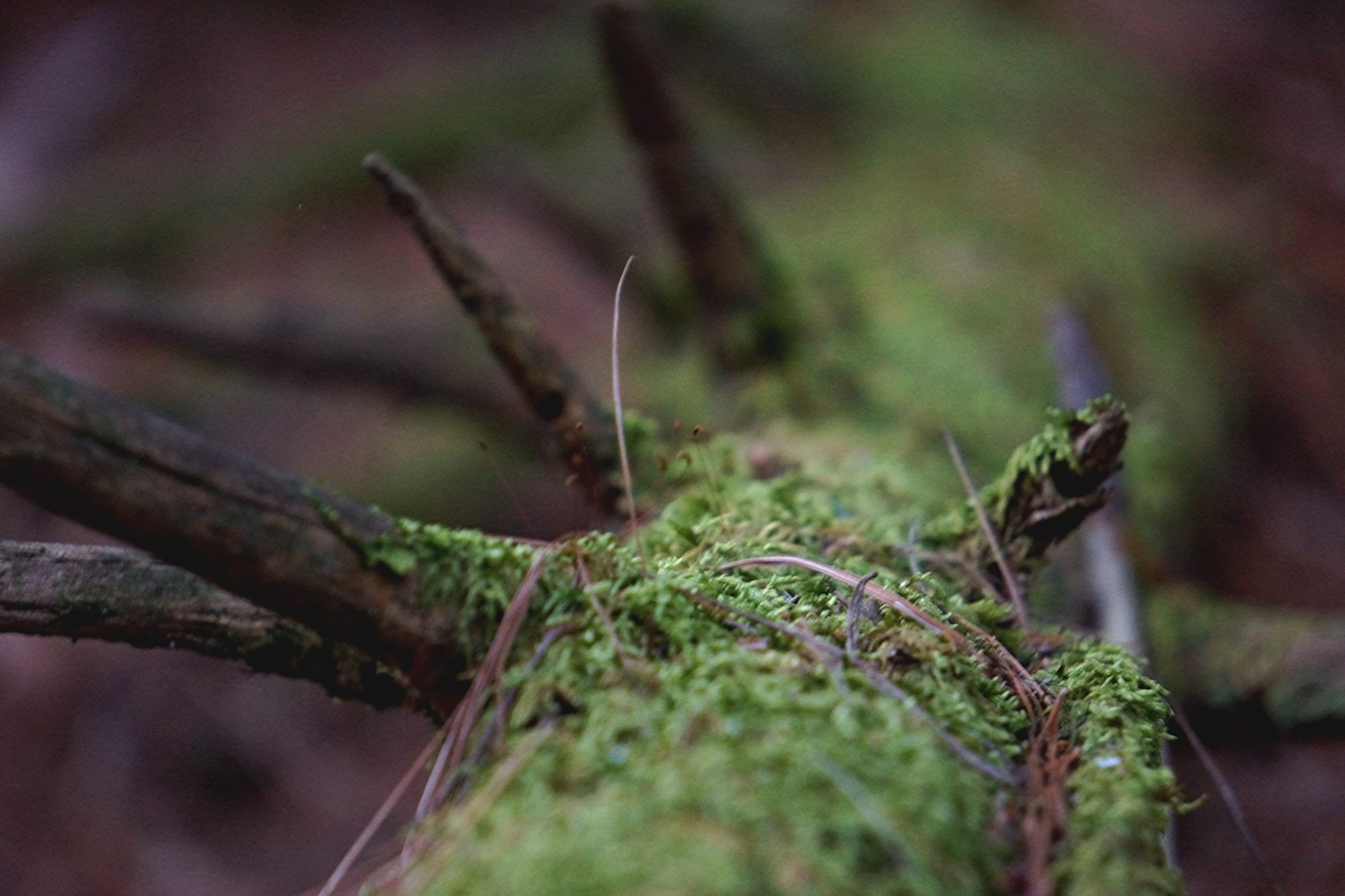 focus on foreground, close-up, selective focus, growth, plant, nature, leaf, green color, twig, outdoors, day, tranquility, no people, branch, stem, growing, dry, beauty in nature, field, sunlight
