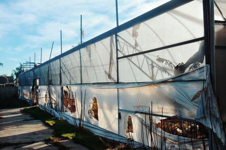 Panoramic view of greenhouse
