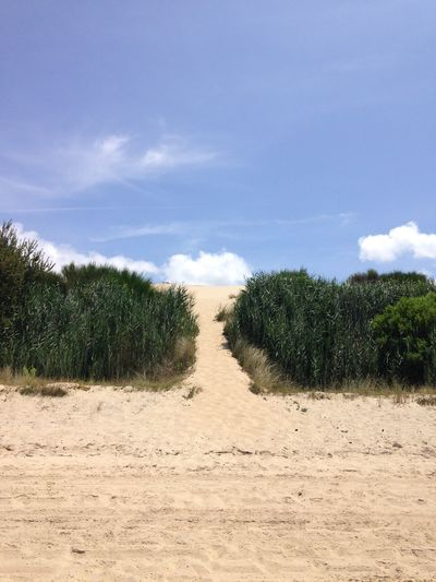 Arcachon Beauty In Nature Cloud - Sky Day Dune Du Pyla Europe Field France Grass Growth Landscape Nature No People Outdoors Sand Scenics Sky Tranquil Scene Tranquility Travel Destinations Tree The Great Outdoors - 2017 EyeEm Awards