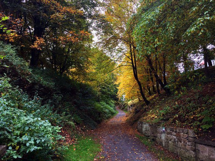 Mittelalterlicher Hohlweg unter dem Herbstlaub. Nature Natural Natural Beauty Path Trees Fichtelgebirge