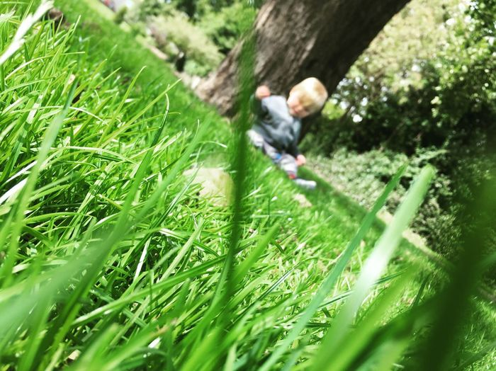 🌱💚 Grass One Person Leisure Activity Outdoors Green Color Day Childhood Growth Full Length Nature Boys Real People Men People Tree Adult One Man Only Son Bestfriend EyeEm Best Shots EyeEm Nature Lover