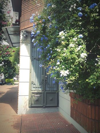 Argentina, Posadas.... Door Flowers Jazmine Flowers, Nature And Beauty Street Photography